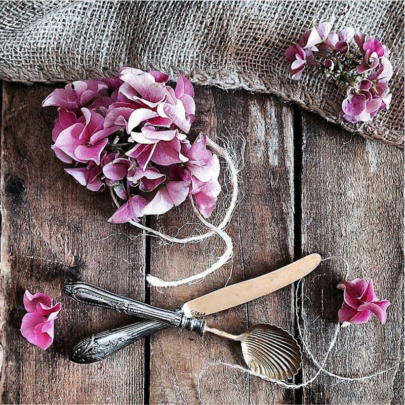 Jardin rose photographie stock libre de droits