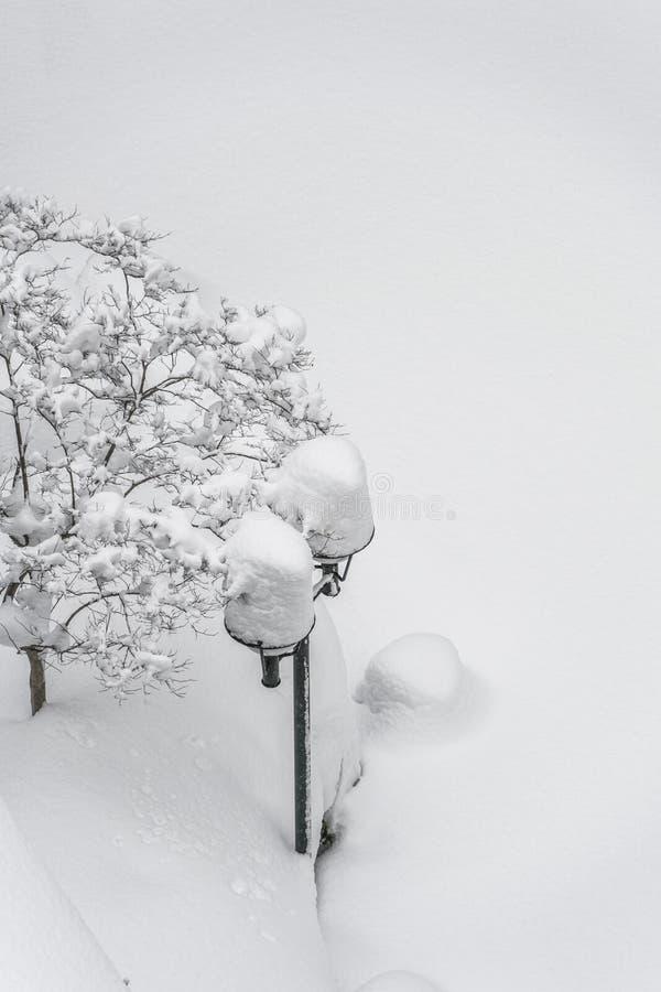 Jardin sous la neige en hiver photo libre de droits