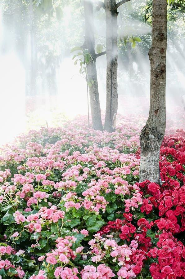Jardin sous les arbres images stock