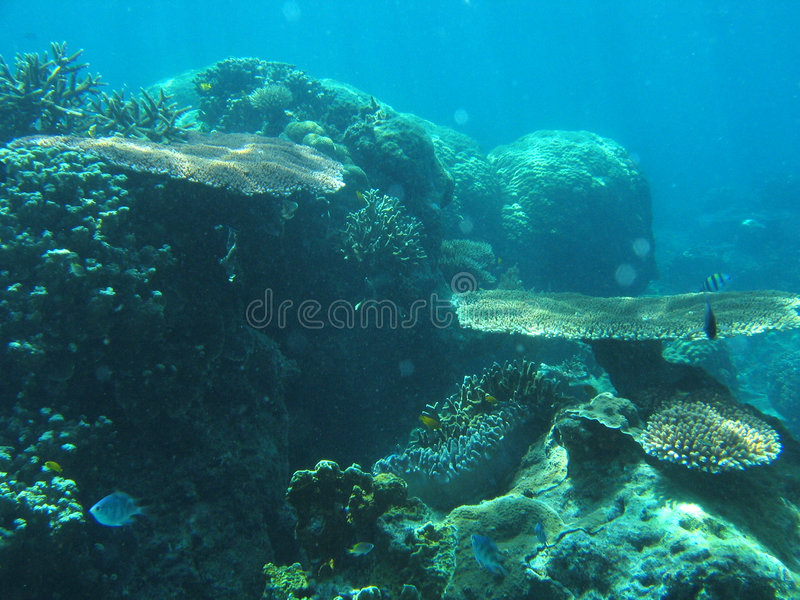 Jardin sous-marin images stock
