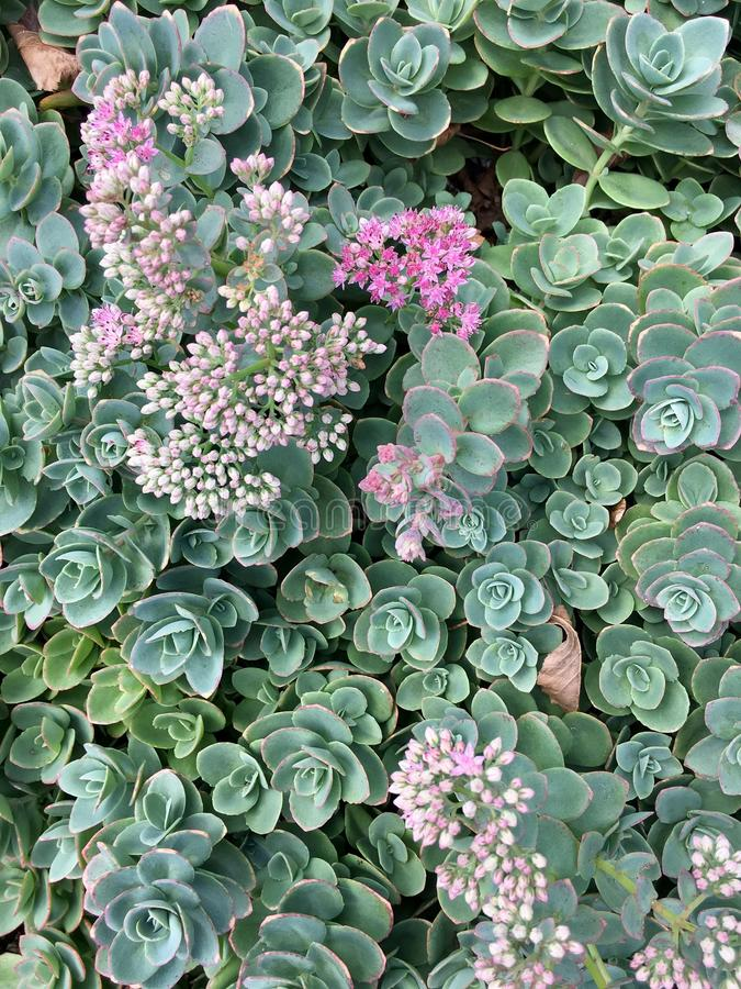 Jardin succulent photo stock