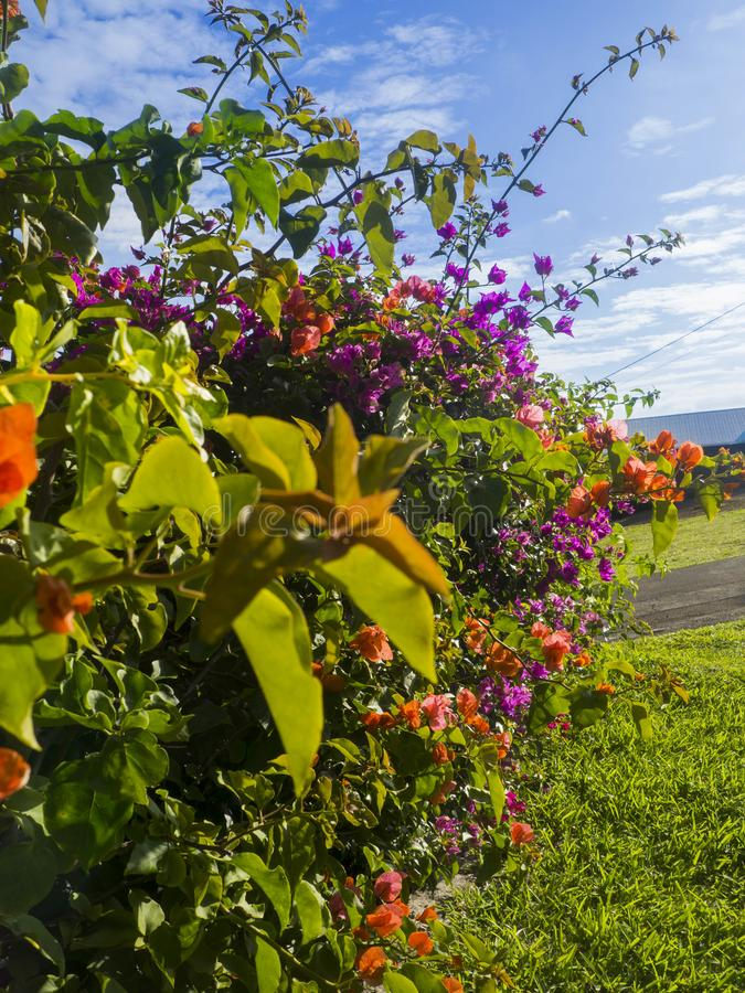 Jardin sur Reunion Island photo stock