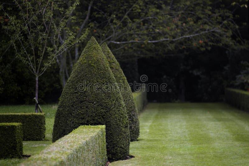 Jardin topiaire foncé image stock