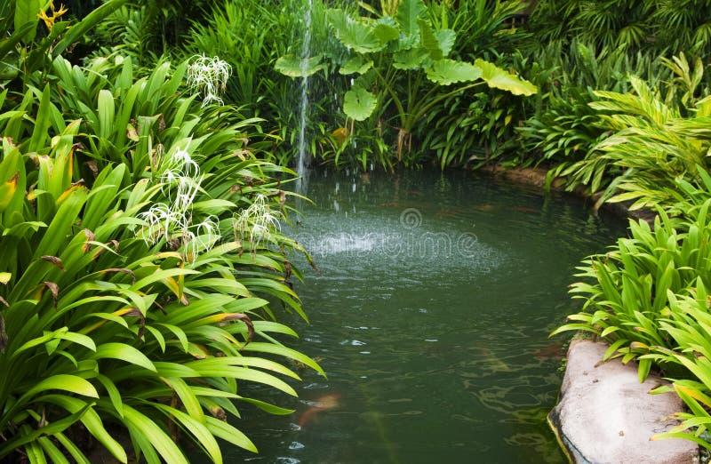 Jardin tropical photographie stock libre de droits
