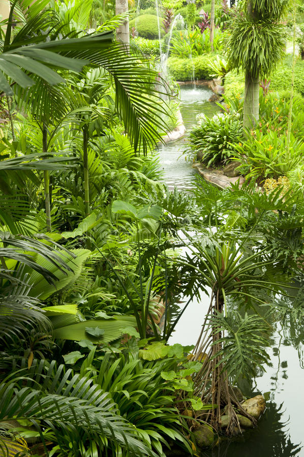 Jardin tropical images stock