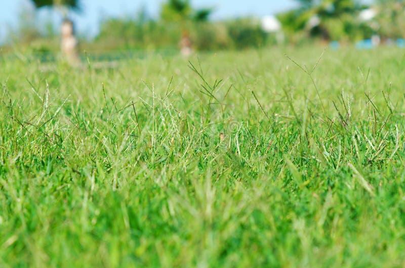 Jardin tropical image stock