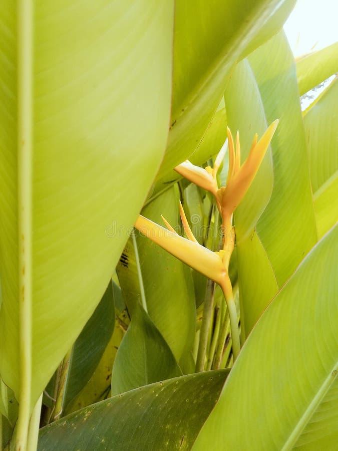 Jardin tropical photo libre de droits