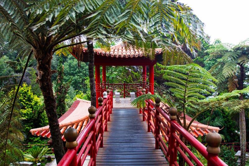 jardin tropical dans le style japonais image stock image du japonais madeira 32694403. Black Bedroom Furniture Sets. Home Design Ideas