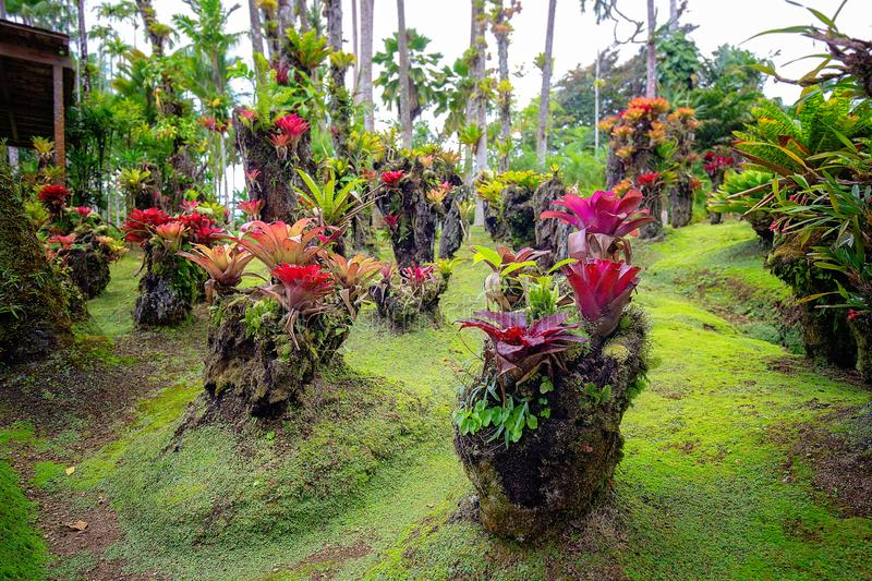 Jardin tropical de balata Martinique images stock