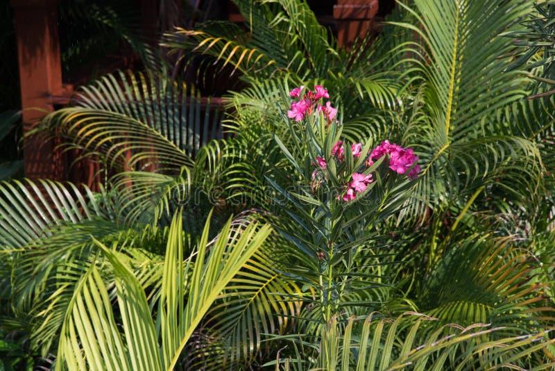 Jardin tropical luxuriant photos libres de droits
