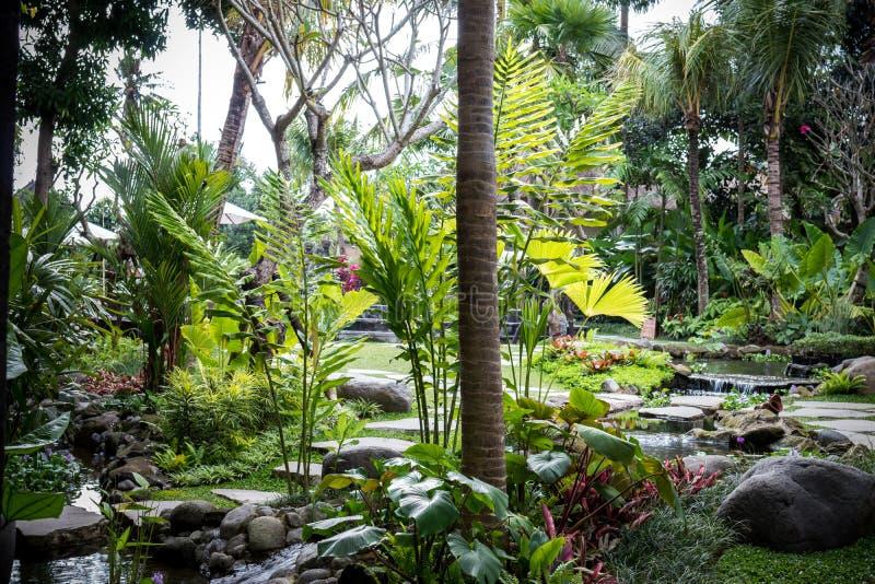 Jardin tropical luxuriant avec les fleurs et les plantes colorées assorties ville courante de coucher du soleil de forme de bel I photo stock