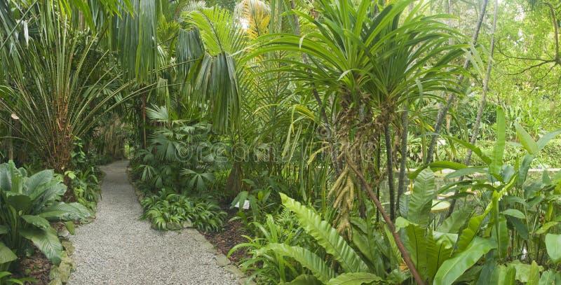 Jardin tropical, Malaisie photo libre de droits