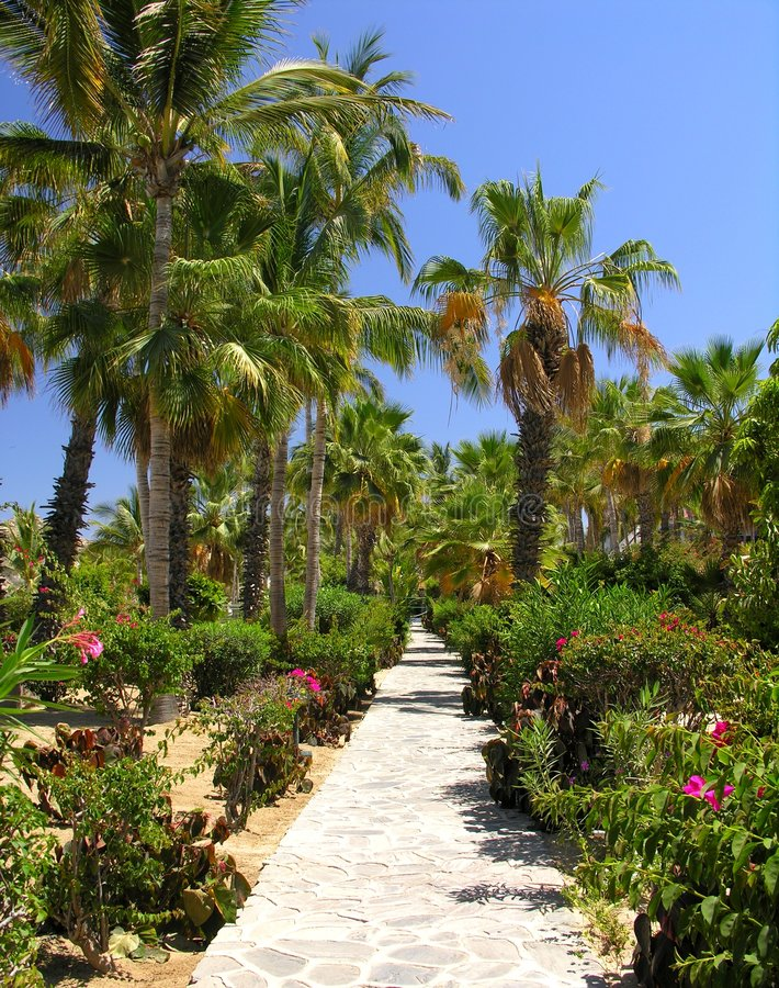 Jardin tropical No.3 photographie stock