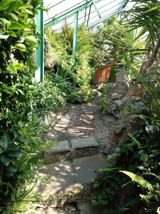 Jardin vert photographie stock libre de droits
