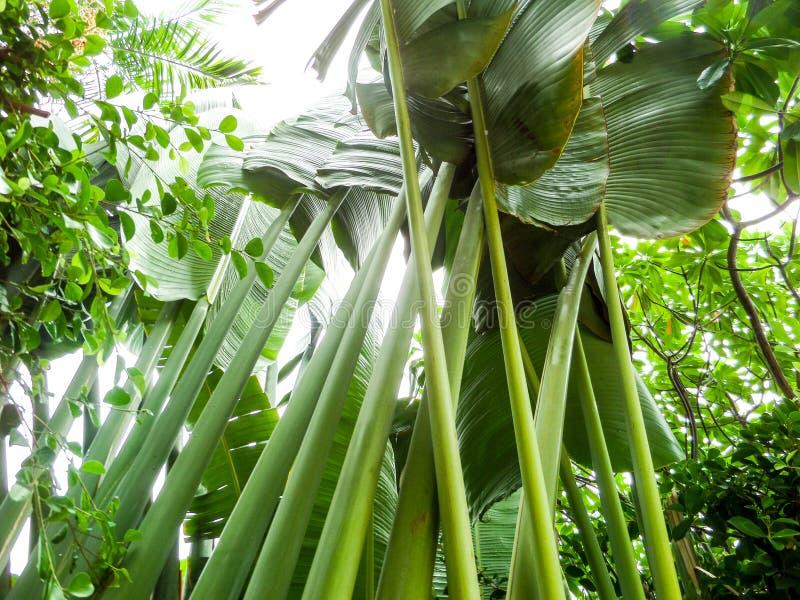 Download Jardin vert image stock. Image du assez, isolement, hawaï - 56480339