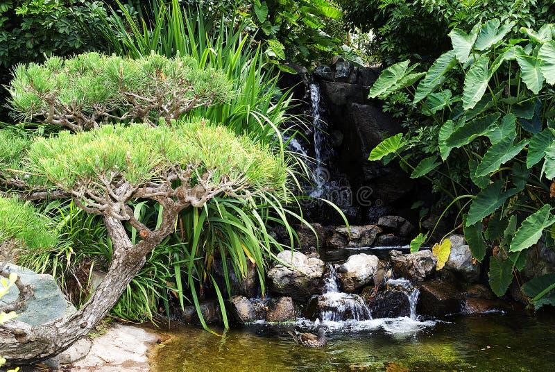 Jardin vert avec la chute de l'eau images stock