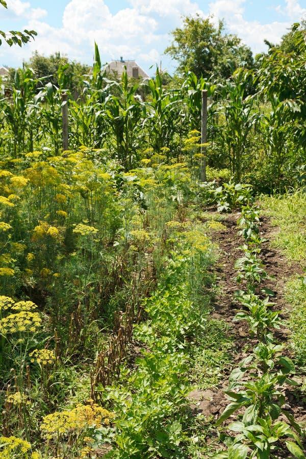 Jardin vert de pays sur l'arrière-cour photos libres de droits