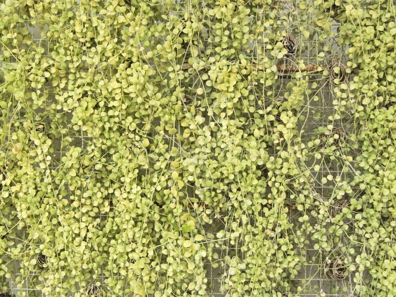 Jardin Vertical Sur Le Grillage En Métal Blanc Image stock - Image ...