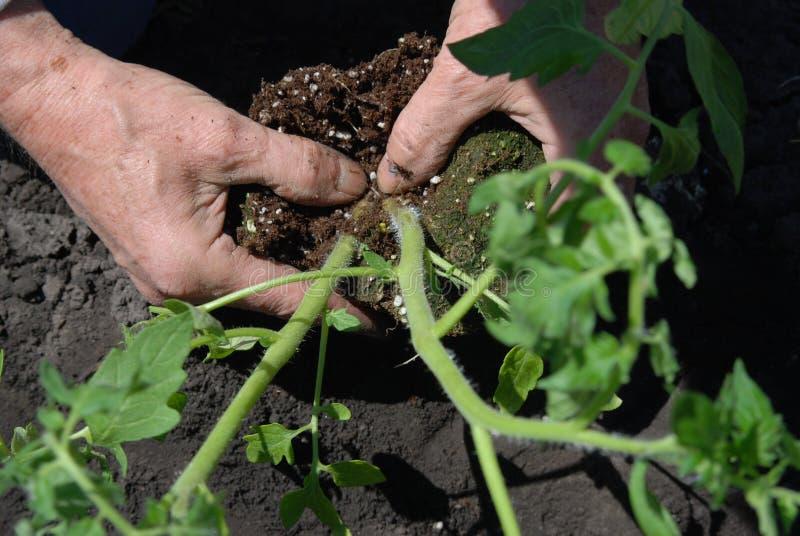 Jardinage images stock