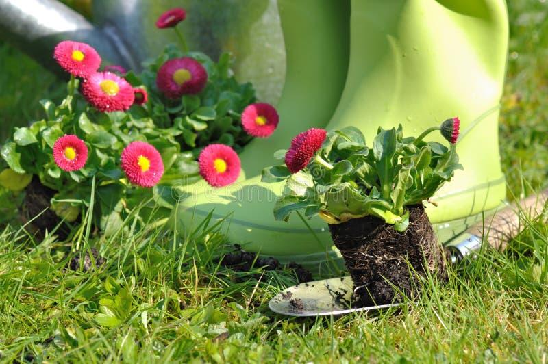 Jardinage au printemps images libres de droits