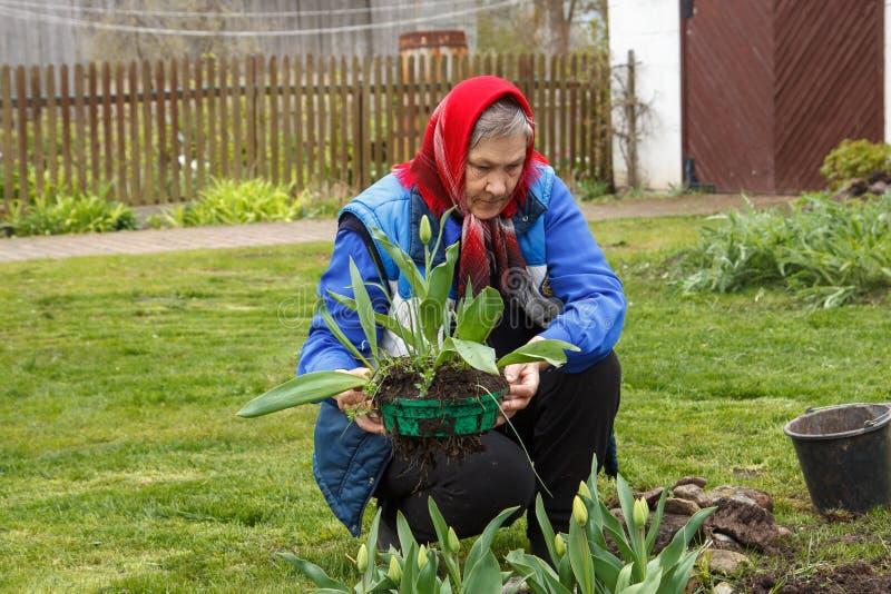 Jardinage de vieille dame image stock