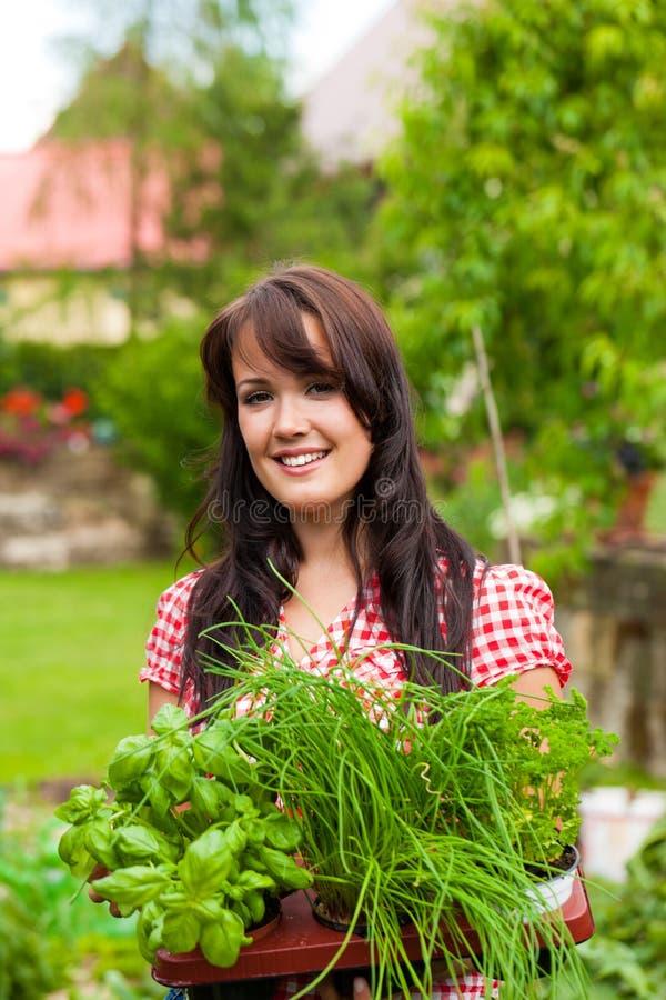 Jardinage en été - femme avec des herbes photo stock