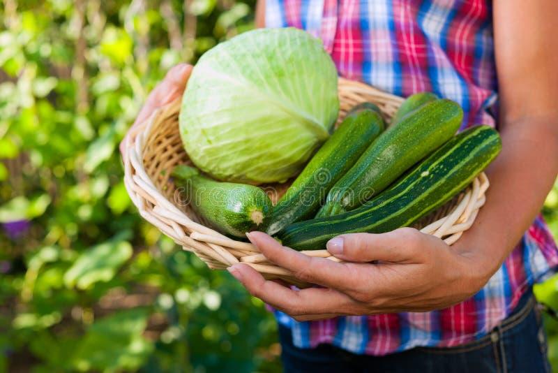 Jardinage en été - femme avec des légumes photos libres de droits