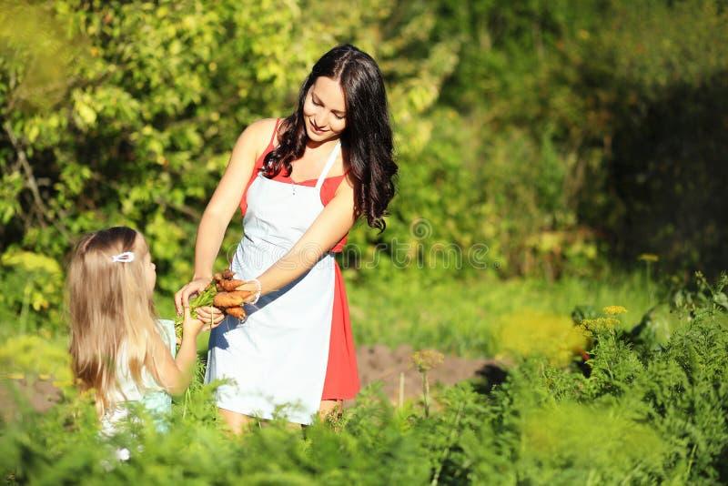 Jardinage - femme avec les carottes organiques dans un potager Contre-jour images stock