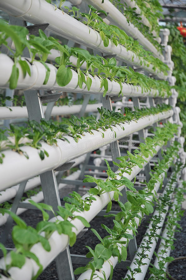 Jardinage hydroponique photos libres de droits