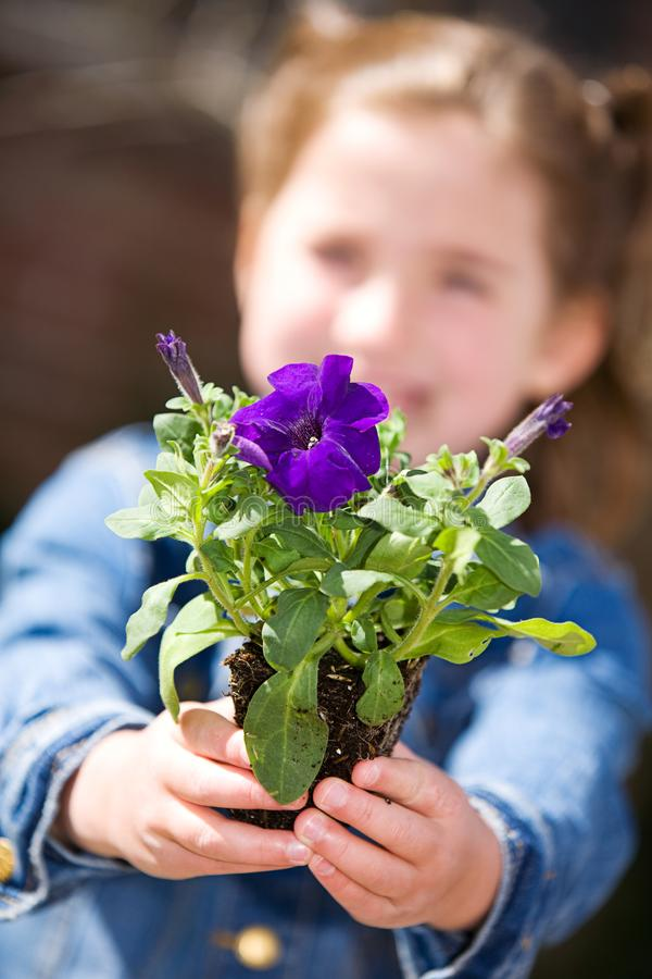 Jardinage : Petite fille donnant Pansy Seedling image stock