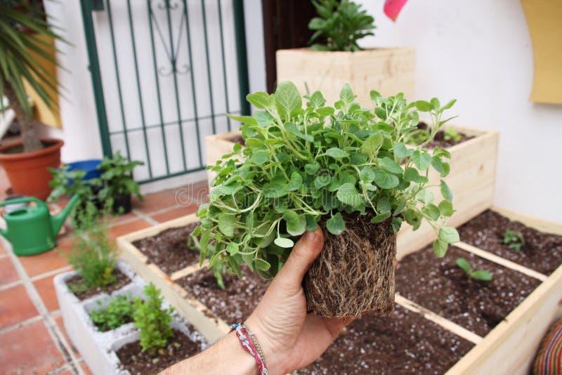 Jardinagem foto de stock royalty free