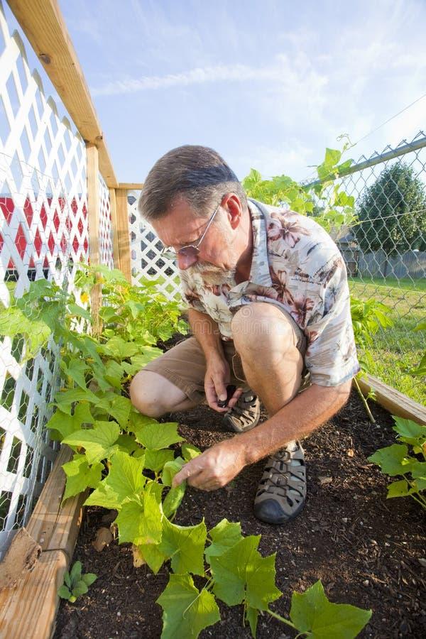 Download Jardinagem ativa do adulto foto de stock. Imagem de homem - 10053140