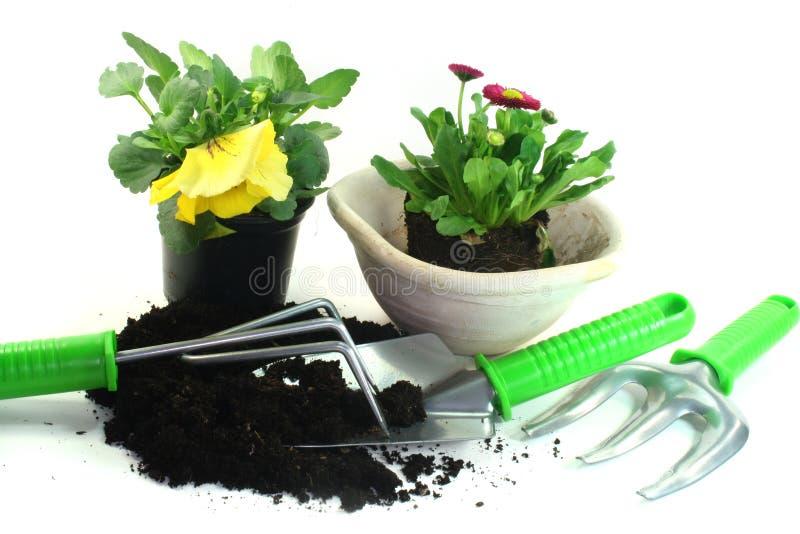 Jardinagem com flores da mola fotos de stock royalty free