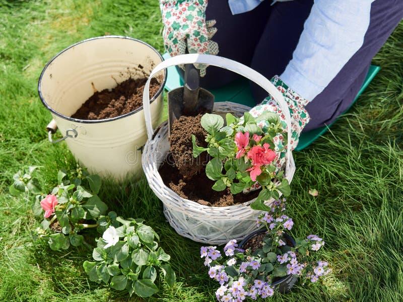 Jardinagem da mulher fotografia de stock royalty free