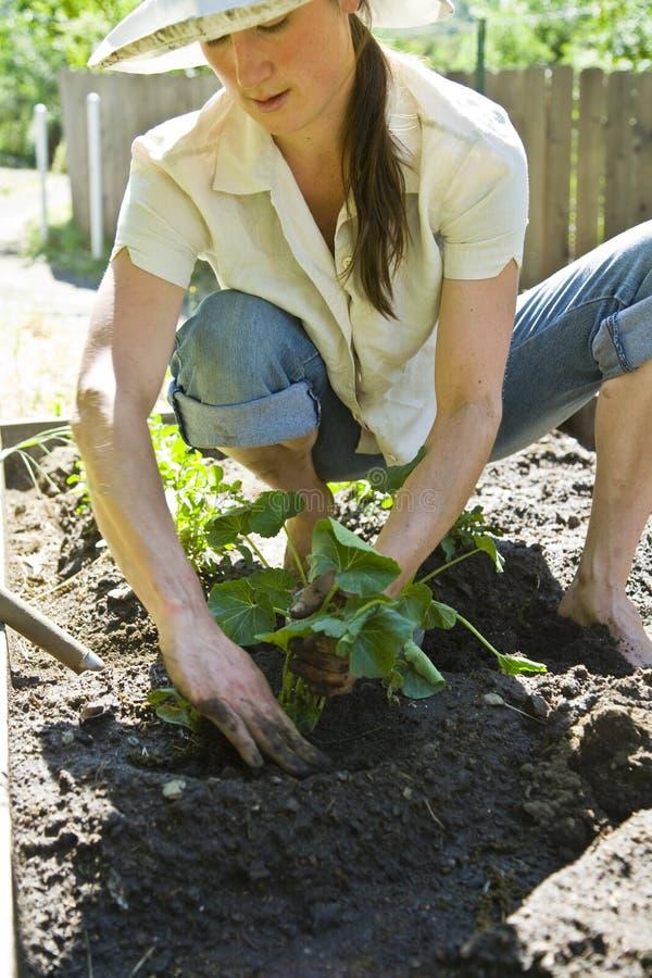 Jardinagem da mulher nova. fotografia de stock