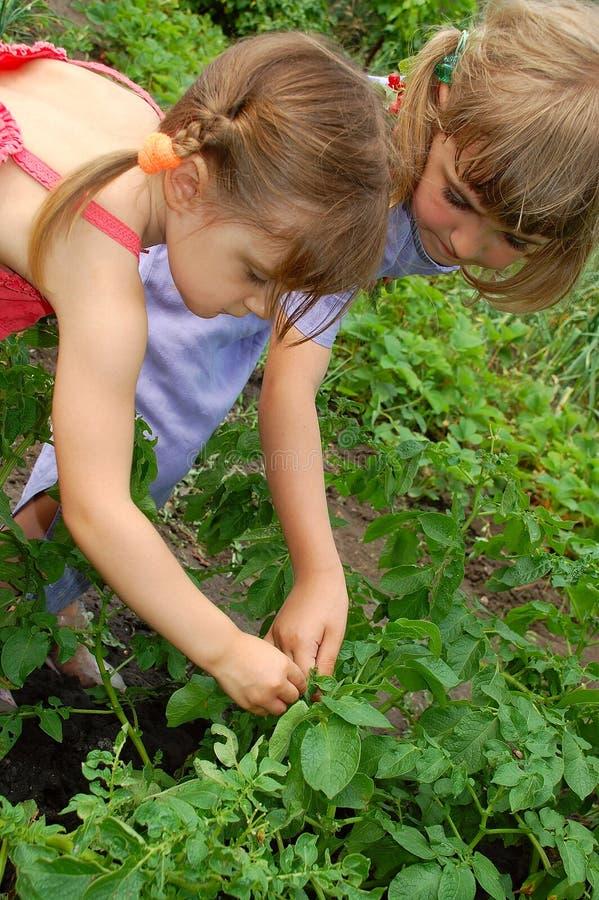 Jardinagem de duas meninas fotos de stock royalty free