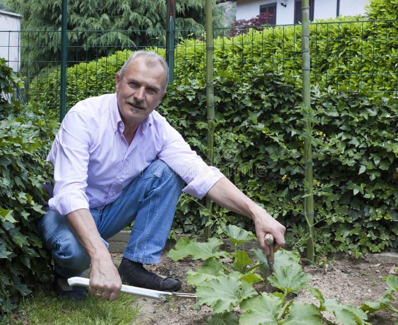 Jardinagem do homem sênior imagem de stock royalty free