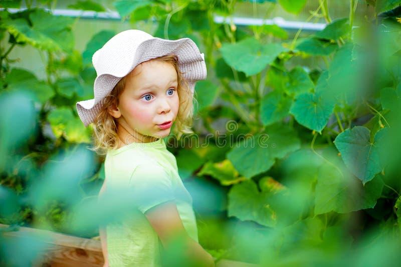 Jardinagem - menina que toma das plantas no greenho imagem de stock royalty free