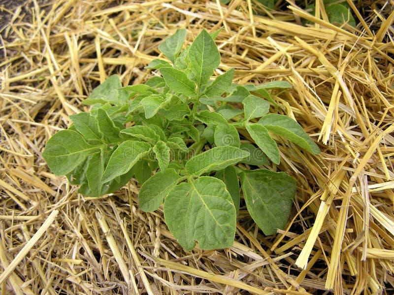 Jardinagem orgânica fotografia de stock