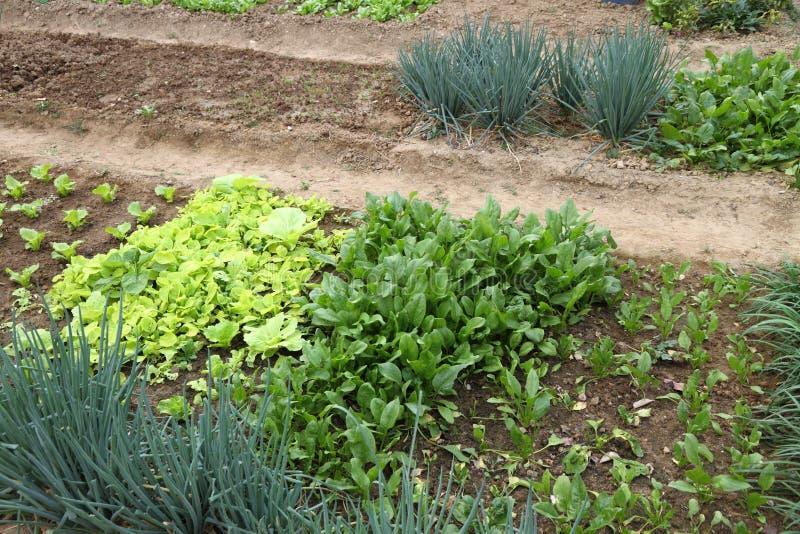 Jardinagem orgânica imagens de stock royalty free