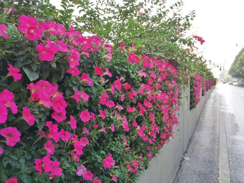 Jardinagem Paisagem vertical floresça a parede no lado da estrada foto de stock