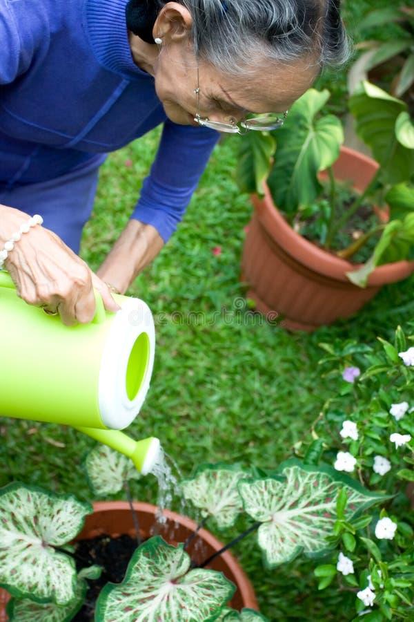 Jardinagem sênior ativa da mulher fotografia de stock royalty free