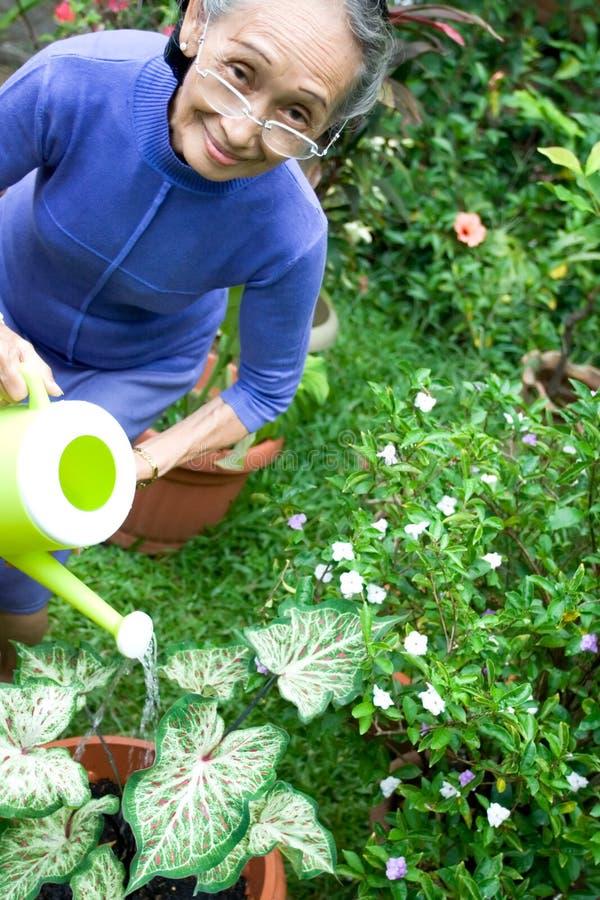Jardinagem sênior ativa e feliz da mulher foto de stock