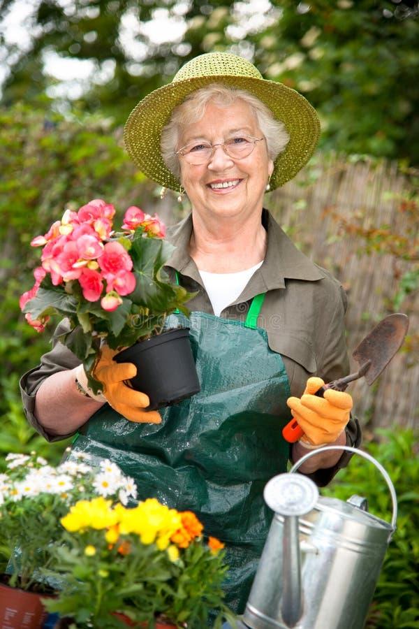 Jardinagem sênior da mulher fotos de stock