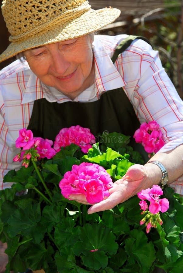 Jardinagem sênior da mulher imagens de stock