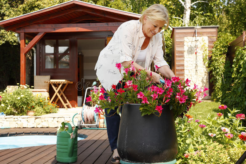 Jardinagem sênior da mulher foto de stock