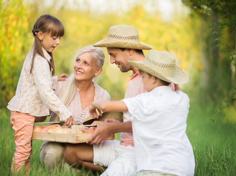 Jardinando, conceito de família foto de stock
