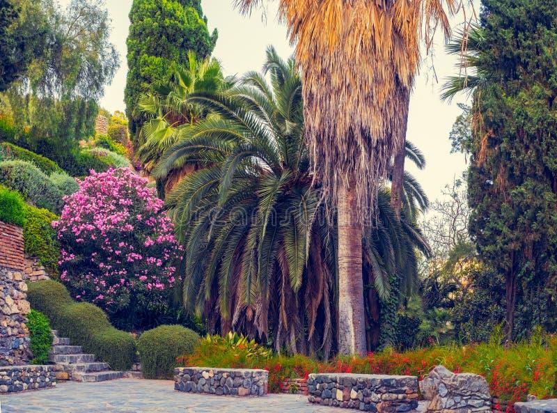 Jardine com árvore de palmas, flores e as escadas de pedra foto de stock royalty free