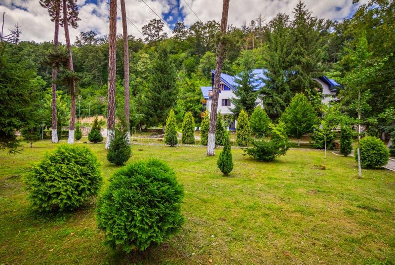 Jardine com grama verde, arbustos e árvores fotografia de stock