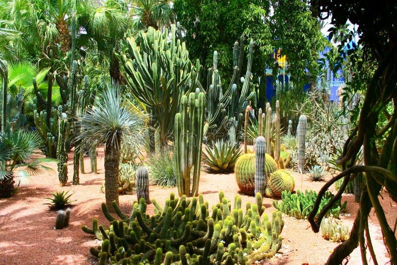 Jardine Majorelle in Marrakech, Marokko royalty-vrije stock afbeeldingen